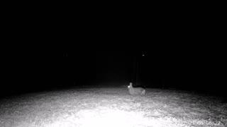Neighborhood Bunny