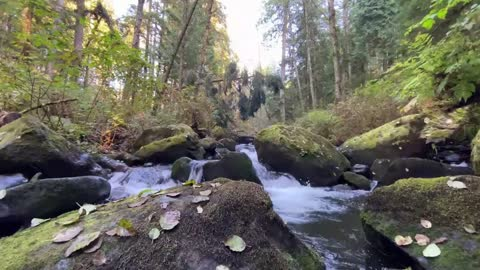 Classical Music to Relax and Study relaxing nature sound river birds singing Beethoven