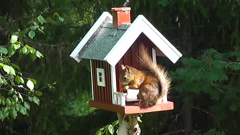 a squirrel in a house