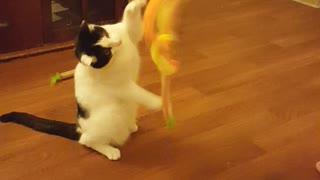 Oreo Kitty
