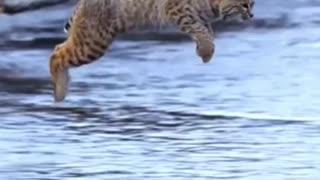 viral cat jumps