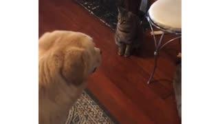 Dog won't eat treat until cat gets one