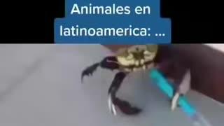 Animales en Latinoamérica 😂😂😂