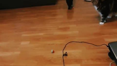 Kitty doing the laser dance