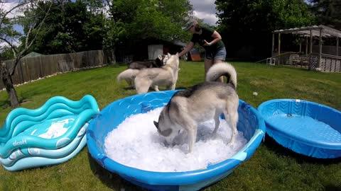 Ice pool for the huskies