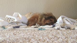Very relaxed doggo snoring