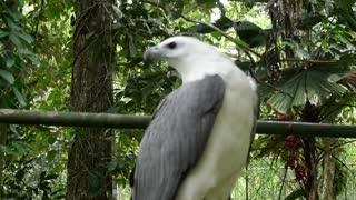Beautiful Birds Free Stock Footage