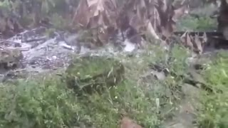 Video: Fuerte granizada sorprendió a habitantes de Oiba este jueves