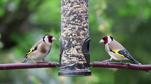 Two birds are eating