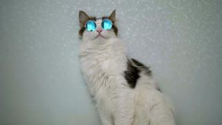 Cat model funny animals