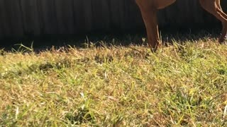 Jumping Doggo Playing with Bird Friends