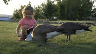 Little girl feeding wild geese