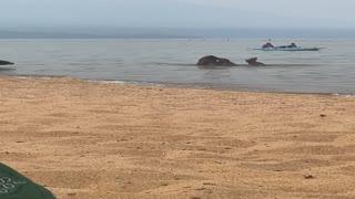 Bear Family Has A Beach Day