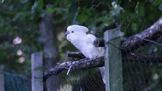 Watch this beautiful bird dance
