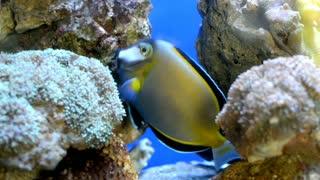 beautiful fish ♥
