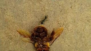 Ants food