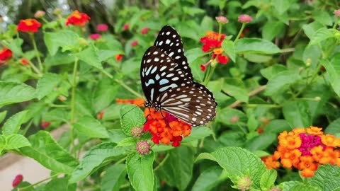 #the butterfly