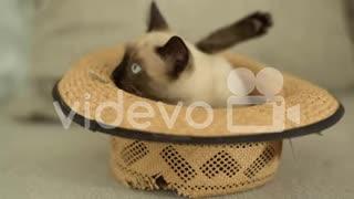 Funny kitty kat