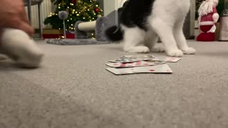 Trying to play snap with a kitten