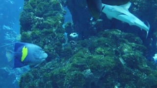Fish among the coral reefs - HD video