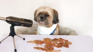 ASMR Dog eats dehydrated chicken