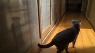 Наглый кот ломится в комнату.