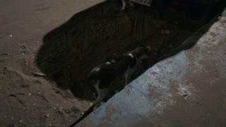 Street Cat Makes Suspicious Sound Under Car