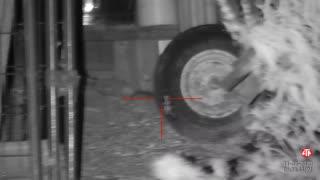 Bushido's HW100 Night Vision Rat Hunting 11/30/2020