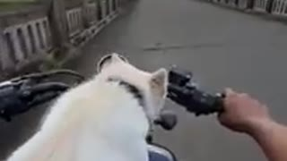 Dog love relationship with humans