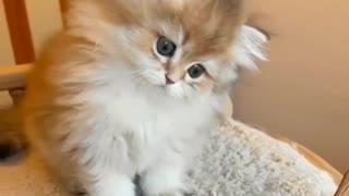 Lump of happiness. Little kitty