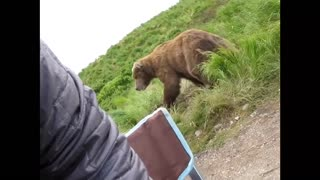Don't panic but there is a Bear right there!