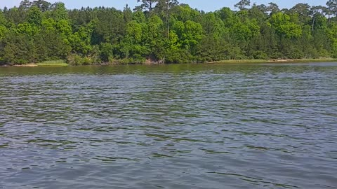 Dolphins in the ICW