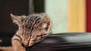 A sick little kitten sleeps