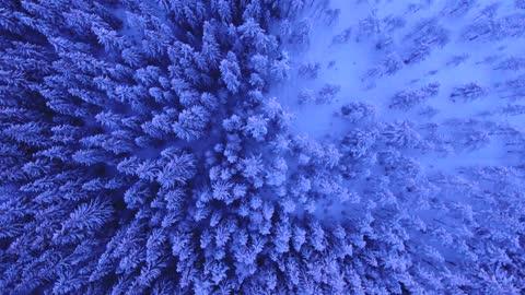 beautiful snowy trees
