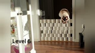 Cat jumps 7 levels