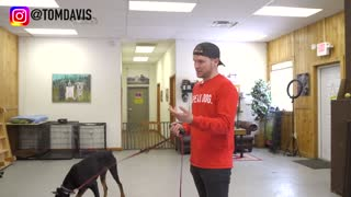 Dog training collar with remote and what is the difference between shock collar and e collar