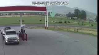 Lightning Strikes Cow