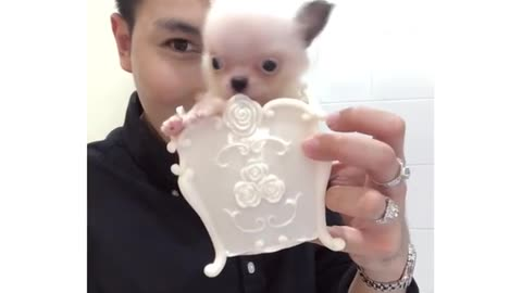 Look At that Small Puppieee