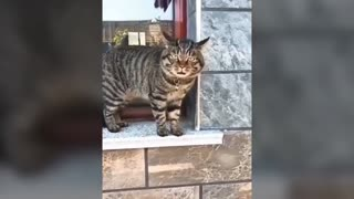Talking cats - These cats can speak English better than hooman