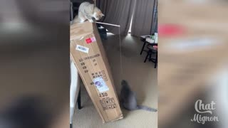 These two cats are playing together!
