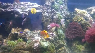 Tropical fish on the background of a coral reef.