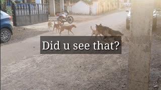 German Shepherd vs street dog. Makes your dog aggressive