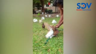 Ida Odinga excited as she feeds doves from the palms of her hands