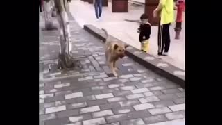 Dog's silly posture