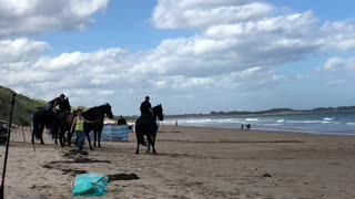 Iconic Black Stallions Saunter Along Beach for Bank Advertisement
