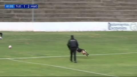 Perrita interrumpe un partido de fútbol arruinando la jugada del equipo visitante