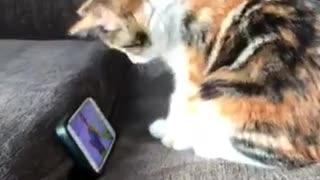 Adorable little kitten loves watching viral videos