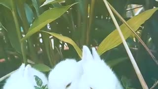 Small rabbits eat from one place