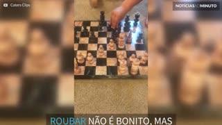 Criança faz dança adorável após roubar no xadrez