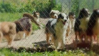 These Are 10 Blue Eyed Dog Breeds